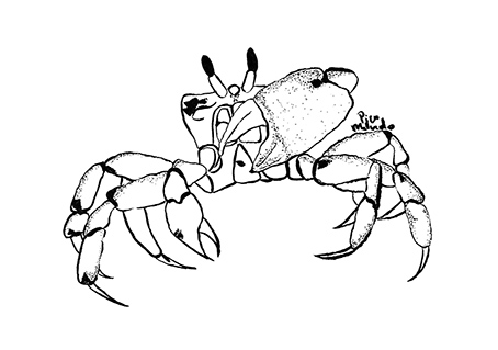 Crab Illustration